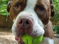 KING's story King, 2-year old Boxer Mix. Has been at