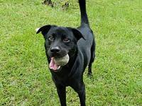 King's story **King needs a special home** King is a