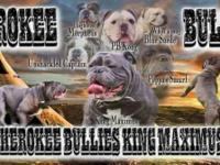 Small hobby breeder since 2003 not a puppymill... My