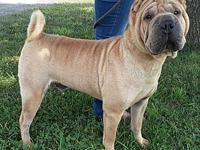 King's story King is a 3 year old Shar Pei X male. He