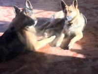 2 male, 0 females beautiful smart ready for loving