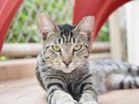Kingston's story - Kingston is a laid back looker that