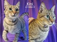 KINI's story Kini is the ultimate purrr machine! This