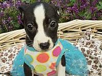 Kinsey-Coming Soon!'s story Kinsey is part of a litter