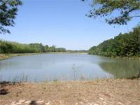 "MINIMIZED!!! This is a ""Rare Find"" 130 acres on the"