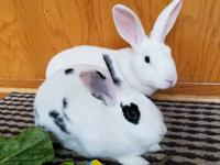 Kip is the all white male bunny and Olivia is the black