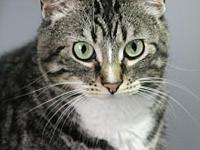 Kira's story Meet Partners for Pets' adoptable cats at
