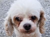 Surrendered for adoption.  Kirby is 7 to 8 years of