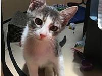 Kirby 2's story Gray tabby/white Kirby is a fun loving,
