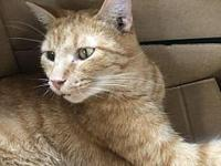 Kirby's story All pets are already spayed or neutered,