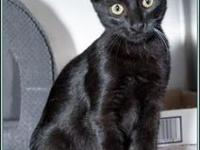 KIRBY's story $97.50 FEE INCLUDES: neutering/spaying,