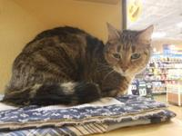 Kisses is a 5 year old sweet female who was surrendered
