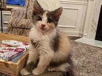 Kit's story AVAILABLE FOR PREADOPTION Kit is a sweet,