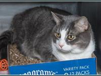 KIT's story $97.50 FEE INCLUDES: neutering/spaying,