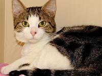 Kit Kat's story HARD-WORKING CAT Terrific Work Ethic!