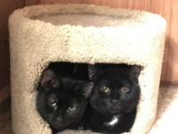 Kit and Kat are very shy, bonded, and get along with