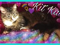 Kit Kat's story ** Contact info: email