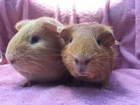 Kirsta, and Kita are bonded sisters born August 24,