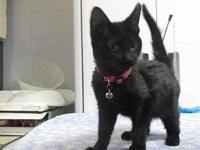 Kitsy's story To adopt one of our animals, please visit
