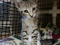 Kitten 16990's story Cutie kitty 16990 is finally ready