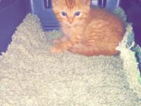 Adopt my cute little kitten please. He was given to me