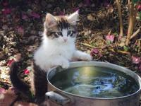 Adorable and sweet male kitten for sale! 10 weeks old,