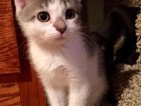 Foster location: Boise, ID Lucy Lu is one of 5 kittens