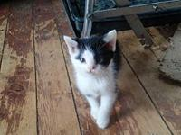 My story Litter of 4 kittens need homes or rescues.