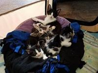 Kittens!!'s story Please contact Lyn