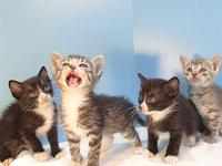 Kittens!'s story Kittens - many kittens we hope to post