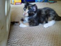 I have 2 female kitten one is calico and the other girl