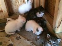 Animal Type: Cats Cute kittens need loving home. They