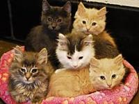 Kittens!'s story THIS IS A STOCK PHOTO AND MAY NOT BE