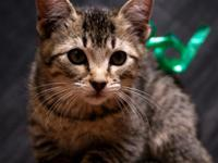 We have three very sweet kittens who need new loving
