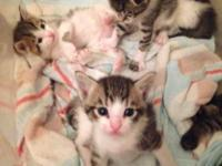 I have two litter of kittens available that are from