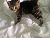 I have two female Mainecoon mix kittens looking for a