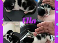 Kittens will be ready for homes in June, vaccinated is