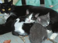 Home grown kittens .Vvery friendly, funy, qiute. One of