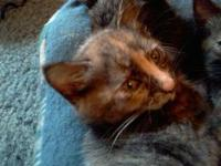 We have 3 female kittens we have the momma & pops