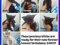 KITTENS!!! KITTENS!!!'s story KITTENS Oh my - these