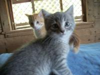 Adorable little kittens are searching for a caring