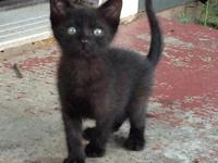 Cutest ever, very affectionate male kittens, 4
