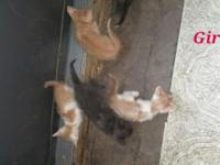 We have kittens that need homes. They are very loveable