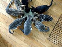 Kittens of the roundtable's story These 8 kittens are 8
