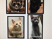 kittens r us !'s story This is a courtesy posting from