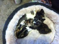 Four healthy and happy kittens looking for homes!!
