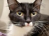 Kitterz's story I am a fluffy ball of love! I also