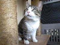 Kittie's story Kittie is a 3 year old female American