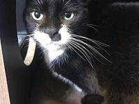 Kitty's story Kitty is a six-year-old female we