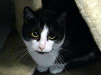 Kitty *Special Adoption Fee's story All our feline